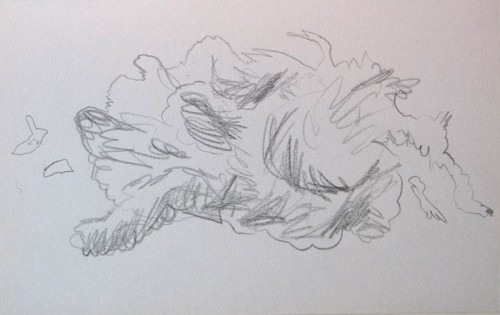 wolk4